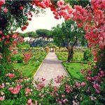 Pepiniera Green Time te ajută la înfrumuseţarea grădinii